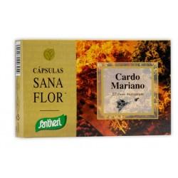 PLANTAS CAPSULAS CARDO MARIANO SANTIVERI